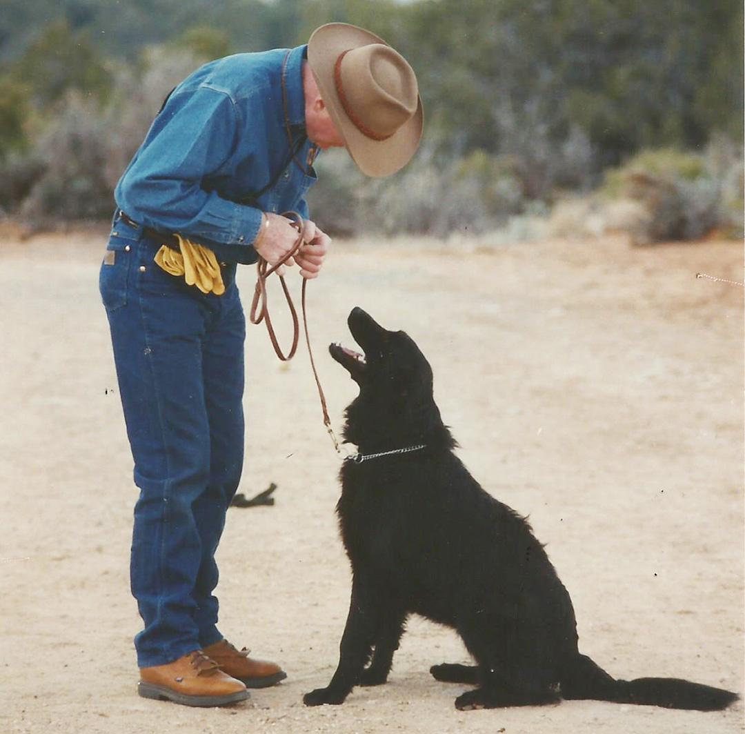 Dog Behavior Training - Fear Frustration