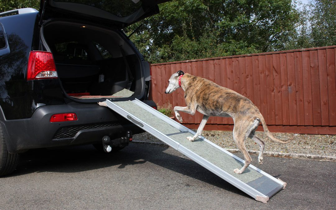 Introducing your dog to a dog ramp
