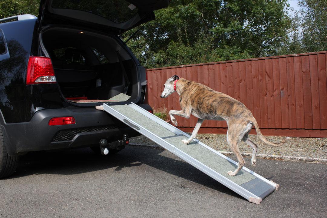 Dog on car ramp